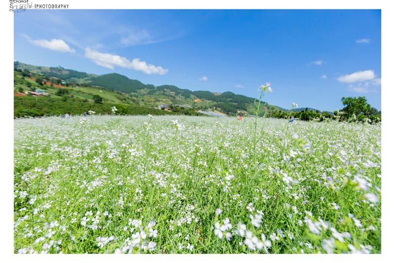 Cánh đồng hoa dại tại đầy thơ mộng