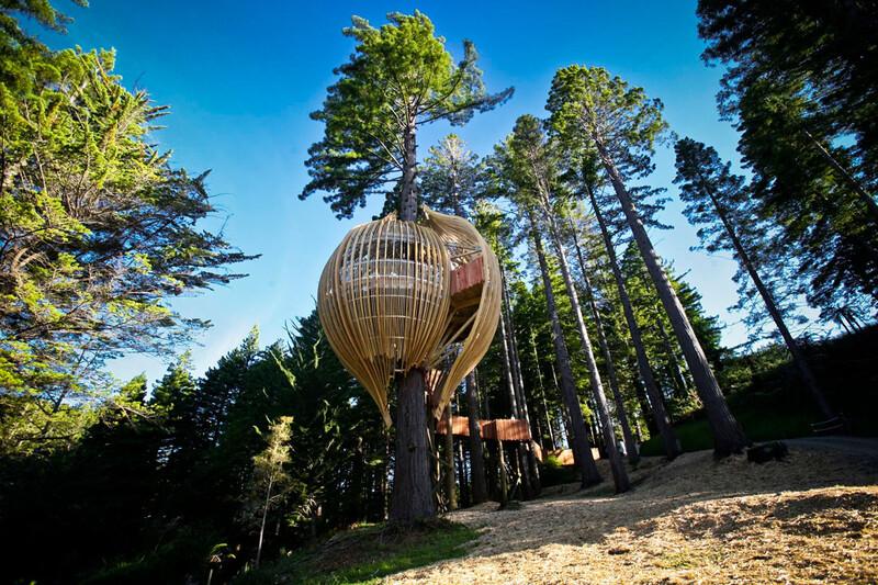 Treehouse xuất hiện nổi bật ngay giữa rừng gỗ đỏ mộng mơ