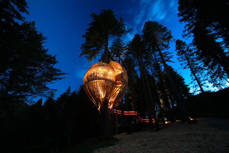 Treehouse khi về đêm bỗng trở nên kì bí đầy lãng mạn