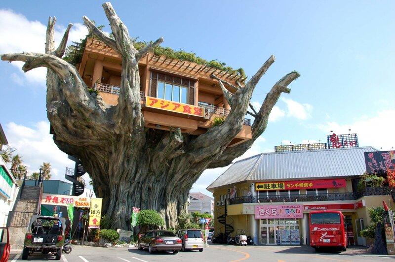Naha Harbor nằm, trên thân cây cổ thụ khổng lồ ngay trong lòng Okinawa
